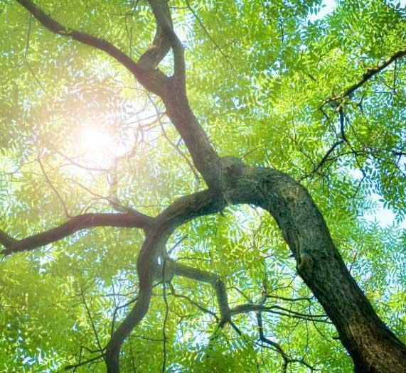 albero_carbon_footprint_stampanti